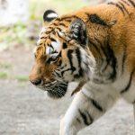 「猛獣狩りに行こうよ」で使える動物一覧!文字数別に紹介!
